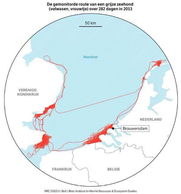 route grijze zeehond