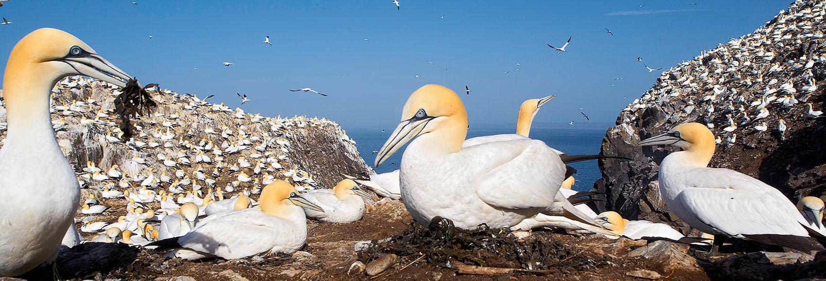 zeevogels in de Noordzee