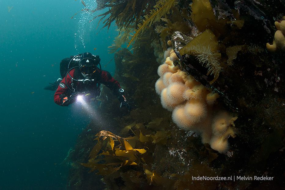 Kleurrijk onderwaterleven (in foto's)
