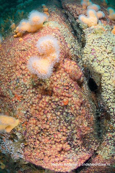 Verrassing: duiken langs kleurrijke rotswand