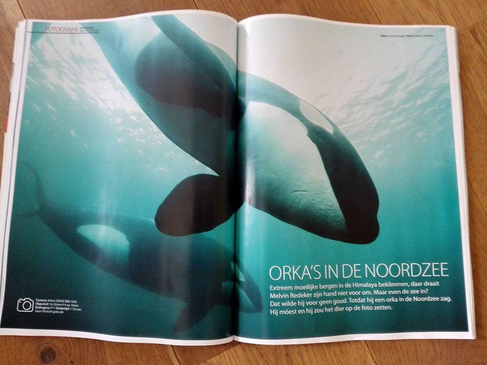 Duiken Magazine: Orka's in de Noordzee