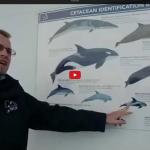 wildlife observatie vanaf de DFDS-veerboot