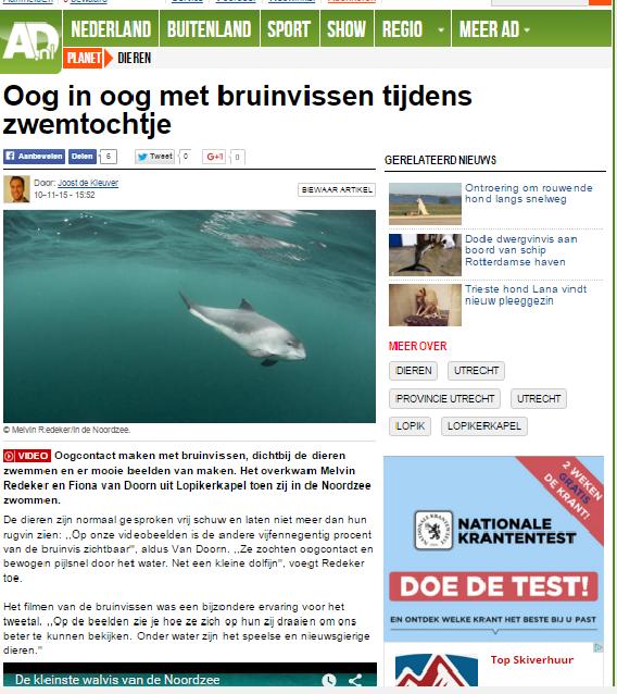 AD - unieke beelden bruinvissen