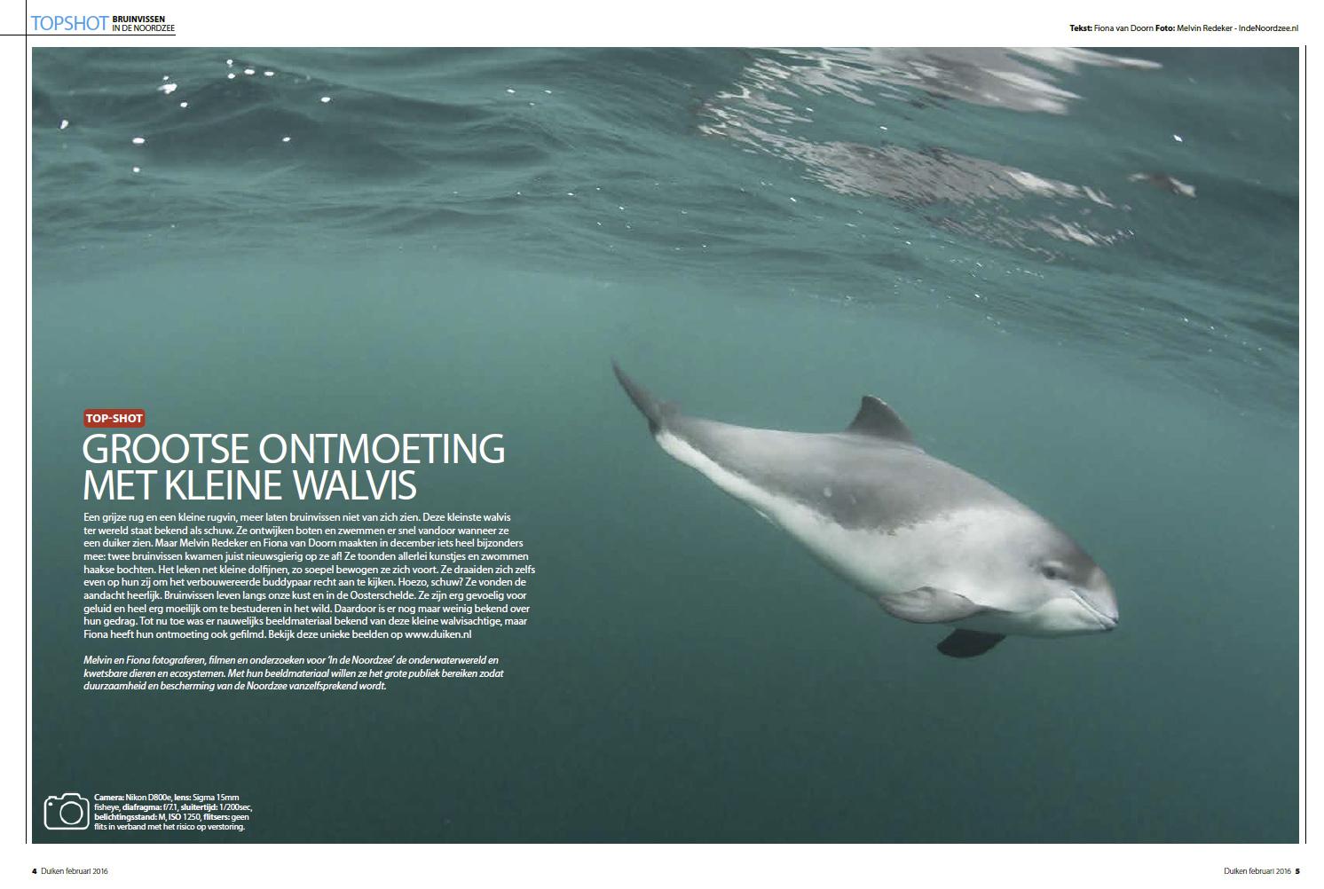 In de Noordzee foto van een bruinvis onder water in Duiken Magazine