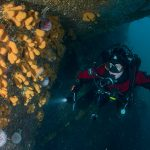 Dodemansduim en zeester in de Noordzee