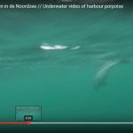 Video bruinvissen in de Noordzee