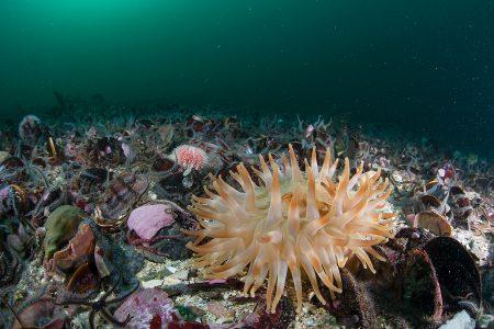 Ongerepte en kwetsbare zeebodem in de Noordzee