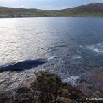 Reddingspoging gestrande walvis - C Criag Nisbet