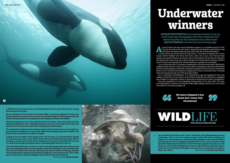 Shetland Life Magazine: orka's in de Noordzee