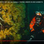 Duiken onder een jan-van-gentenkolonie in de Noordzee
