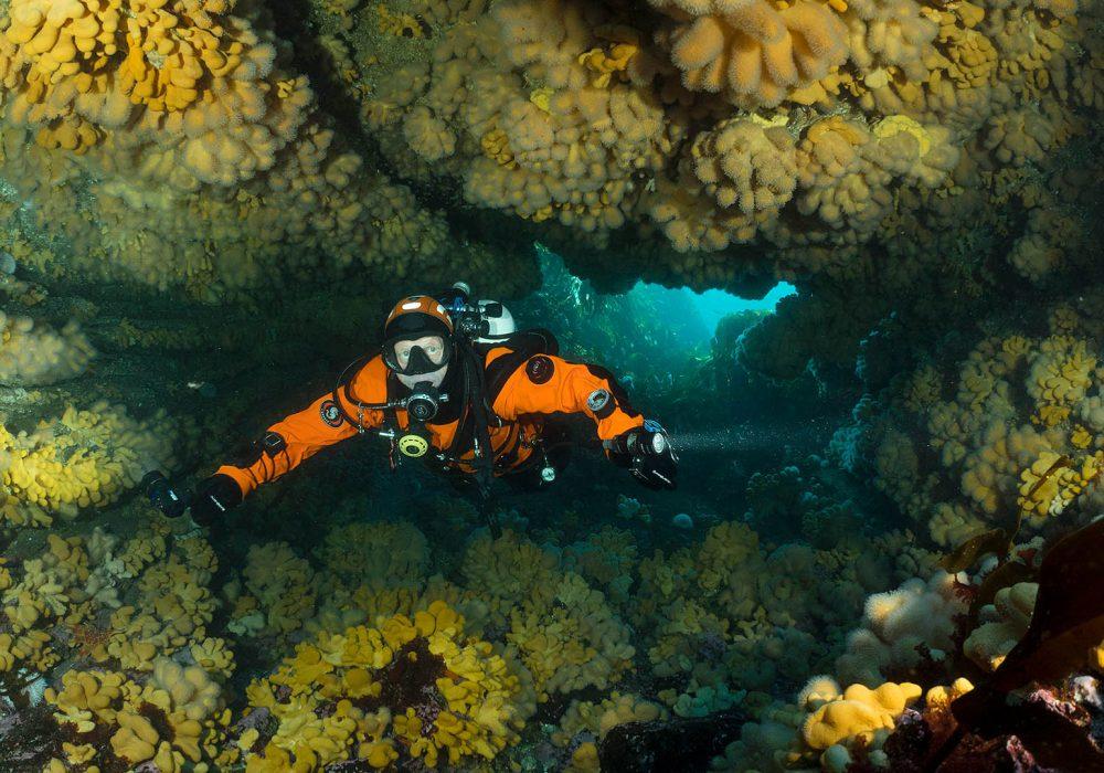 Duiken in koraalgrot in de Noordzee