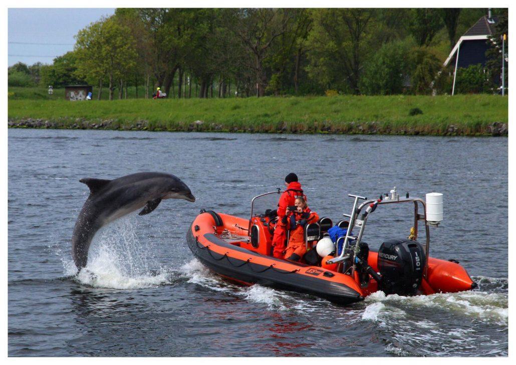 Reddingsactie dolfijn Zafar In de Noordzee